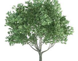 pale green tree 3d model