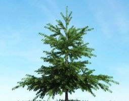 green conifer spruce 3d model