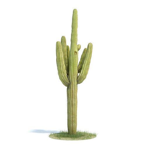 green carnegiea gigantea cactus 3d model