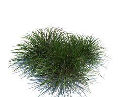 plant nonfloral grassy 3d model obj
