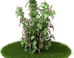 3D model Green And Pink Plant On Lawn