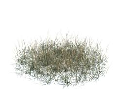 3D Long Dry Grass