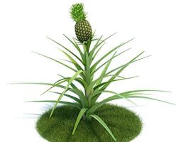 3D model Green Ananas Comosus Plant