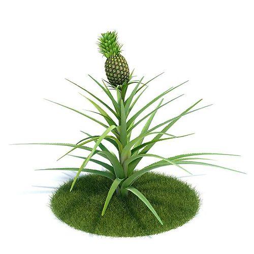 green ananas comosus plant 3d model  1