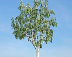 botany 3D model Green Leaf Tree