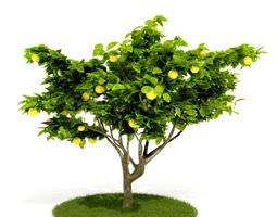 3D Green Lemon Tree