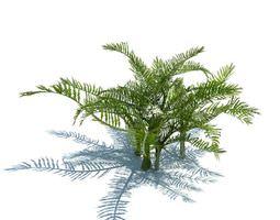plant green fern 3d model obj