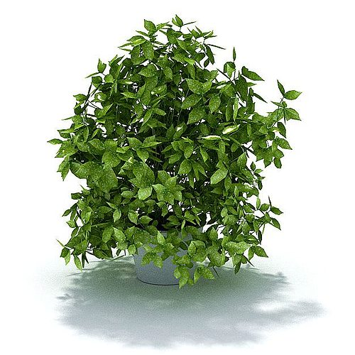green leafy potted shrub 3d model 3ds 1