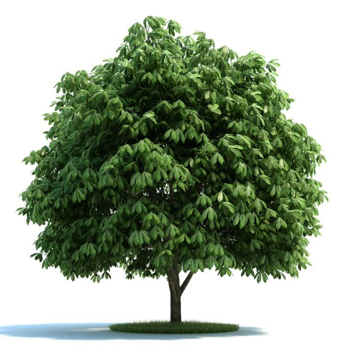 3d Feathery Full Green Tree Cgtrader