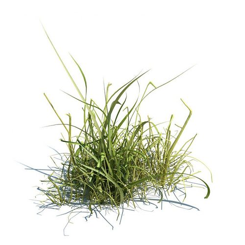 Grass long 3d model cgtrader for Long ornamental grass