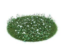 3D model Green Bellis Pernnis Plant