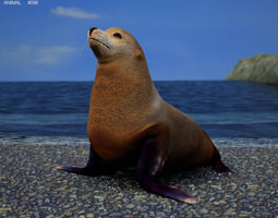 3d asset low-poly brown fur seal arctocephalus pusillus