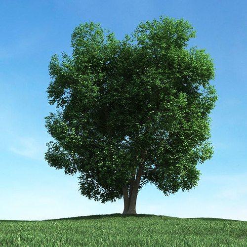 big leafy tree 3d model obj mtl 1
