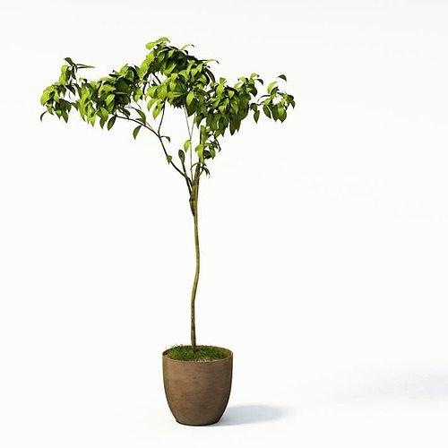 Long Stemmed Green Plant In Vase 3d Cgtrader