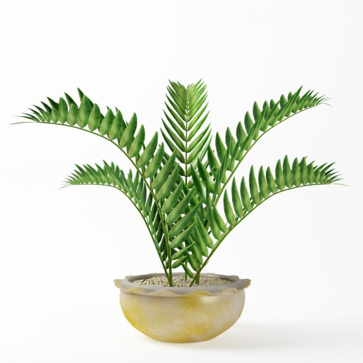 Green Fern Plant In White And Gold Vase 3d Cgtrader
