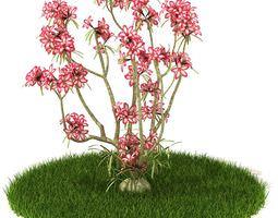 3d model pink flower plant