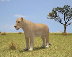 Lioness Panthera Leo 3D model