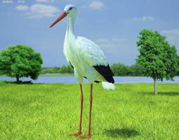 3D model White Stork Ciconia Ciconia