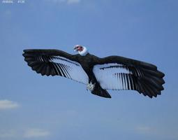 andean condor vultur gryphus 3d asset low-poly