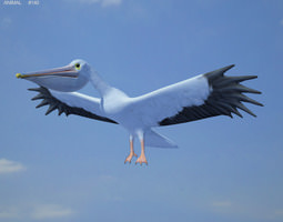 american white pelican pelecanus erythrorhynchos 3d model game-ready