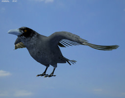 common raven corvus corax realtime 3d model