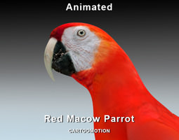 Red Macaw Parrot 3D Model