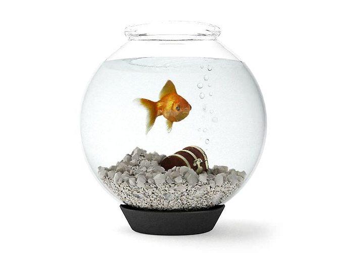 round glass fishtank on black base 3d model obj mtl 1