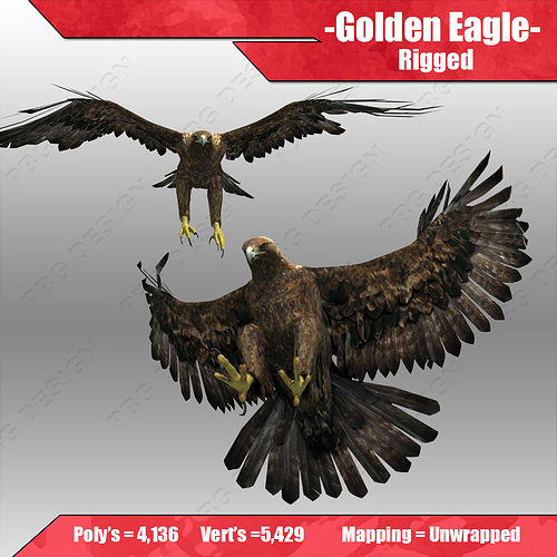 golden eagle 3d model max obj 3ds fbx mtl tga 1