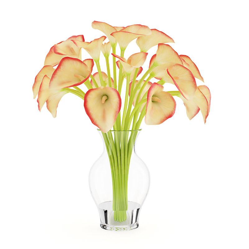 3d Model Calla Lilies In Vase Cgtrader