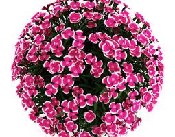 3D Alpine Pink