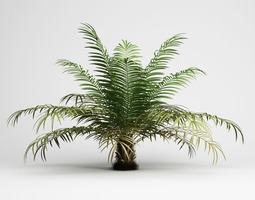 Sugar Palm 3D