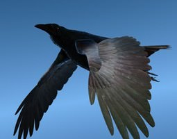 3D CROW - Fully Rigged For Lightwave