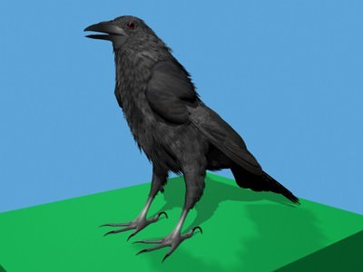 How Make 3d Crow Related Keywords & Suggestions - How Make 3d Crow