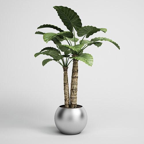 potted houseplant 15 3d model max obj mtl fbx c4d 1