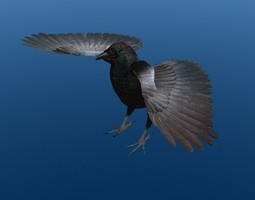 3D Crow Surfaced