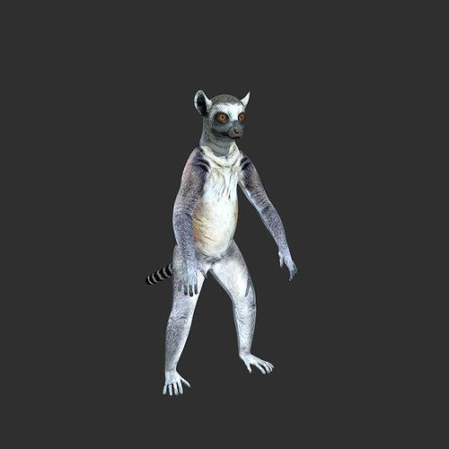 ring tailed lemur 3d model rigged max obj fbx ma mb 1