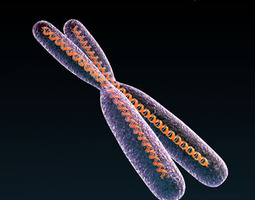 3D Chromosome with DNA