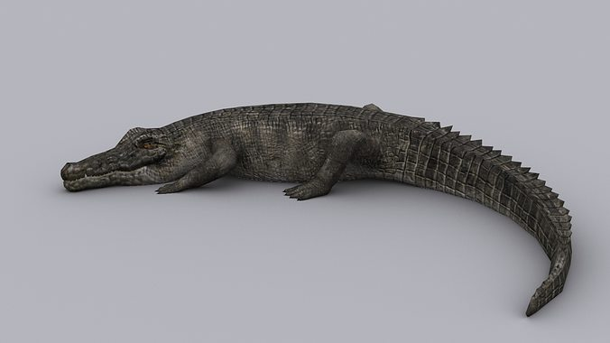 crocodile game ready animated model 3d model low-poly rigged animated max fbx tga 1