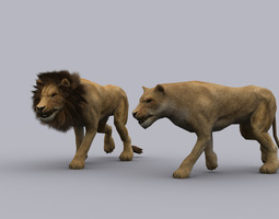 3D asset LION GAME READY ANIMATED MODEL