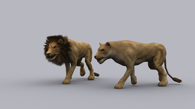 lion game ready animated model 3d model low-poly rigged animated max 1