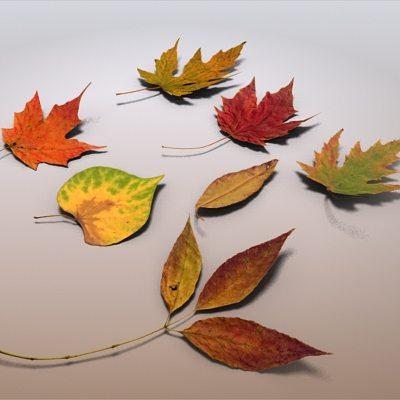 autumn leaves 3d model max obj mtl 3ds fbx c4d lwo lw lws 1