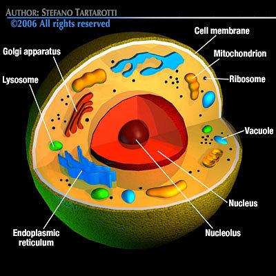 Human Virus Drawing