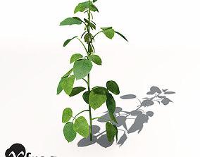 XfrogPlants Soybean 3D model