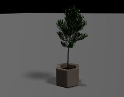 Young Tree 3D model