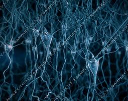 pyramidal-neurons-scene 3d model max