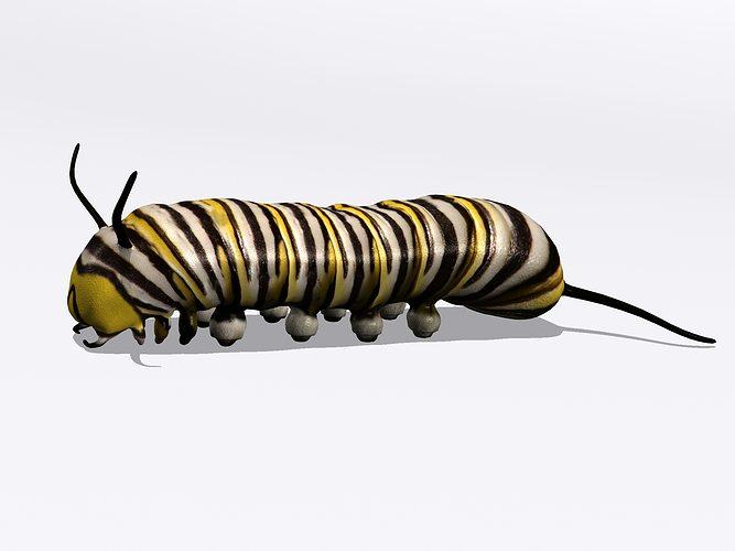 monarch larva 3d model max obj mtl 3ds fbx c4d blend 1