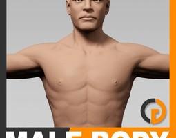 human male body - anatomy 3d model max obj 3ds fbx c4d lwo lw lws
