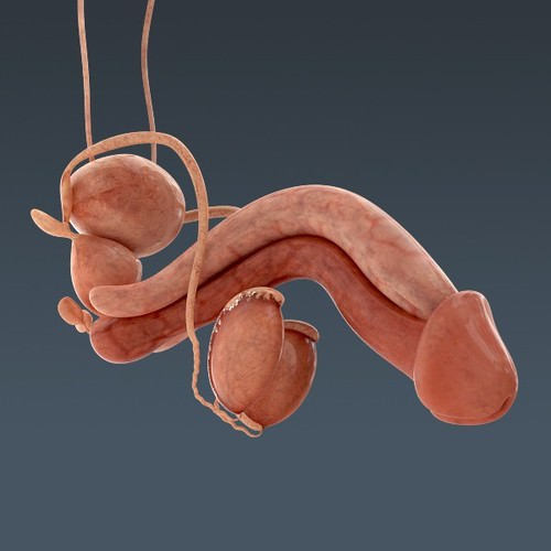 human body internal organs - anatomy 3d model max obj 3ds fbx c4d lwo lw lws 38