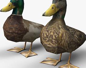 Ducks 3D model