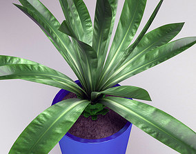 3D Plant palm in blue pot